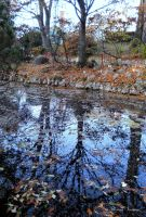 reflection and leafs by florina23