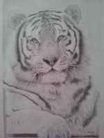 Finished tiger drawing by megh95