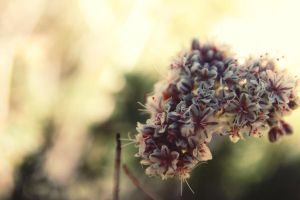cluster by h20baby93