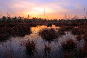 Beauty Of The Swamp by Burtn