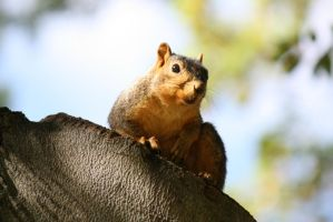 Squirrel Pose by AndehDulac