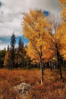 Grand Lake Autumn by Corvidae65