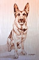 Alsatian dog! Pyrography by LUKAS-87