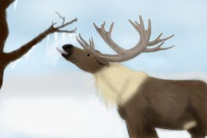 Reindeer Licking Icicles by Cougar28