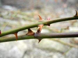 Green Stem, Orange Thorns by XxLonerEyesxX