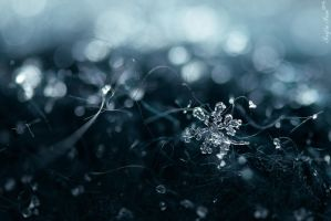 Snow Flake by John77