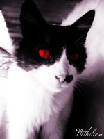 Satan, My cat. Possesed. by nithilien