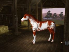Sims3 Pets Creations Hildalgo by Senwolf10