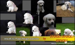 2014.08.25 | Puppy Nougat evolution (4 to 12 weeks by Stock-Stock-Stock