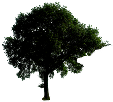 Tree 53 png by gd08