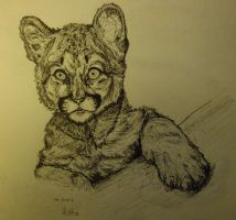 Puma Cub by charcoal-almighty