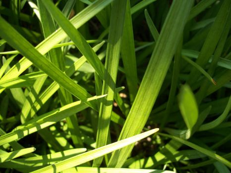 Grass. by No-More-Suffocation
