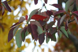 leaves 2 by waterweed-stock