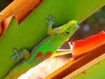 Gecko by MyPhotoParadise
