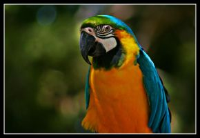 Colorful Parrot by valkyrjan