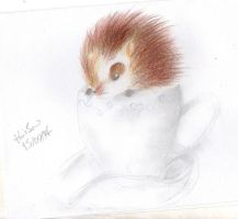 Teacup Hedgie by Hollsterweelskitty