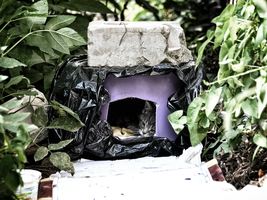 House for stray kittens by Irkis