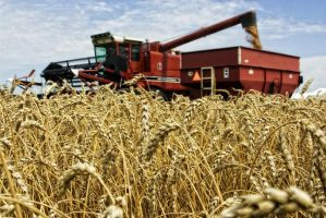 Wheat Harvest '08 by cthacker