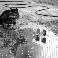 cat and reflections by witchy-poo