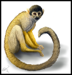 Squirrel Monkey by Magickie