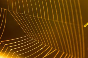 Golden Spiderweb by sztewe