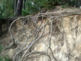 roots 2 by Mortifiera