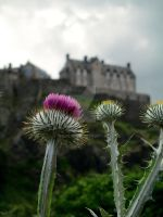 Thistle and Castle II by HyperCaz