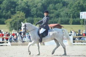 Grey Pony - Eventing Stock 1.17 by MagicLecktra