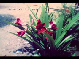 Flower_with_Red by veeradesigns