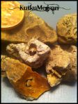 -Tiny Fossilized Wonders- More Oak Grove Fossils by KutkuMegsan