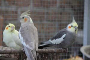 lovely tiel family by theladyinred002