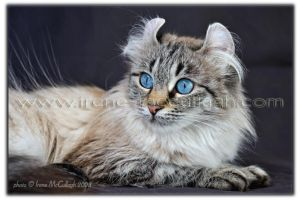 Freya - our Curly Girly by substar