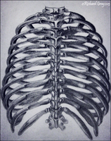 The Human Ribcage by RicGrayDesign