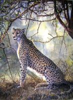 Cheetah by WillemSvdMerwe