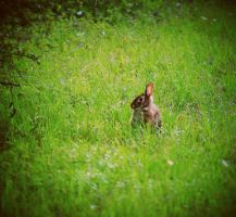 Petter Cottontail Does Exist by sleepbabie