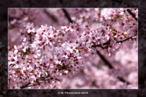 Wild Blossoming Bushes by sicmentale