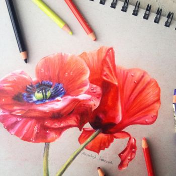 ~Poppies~ by hyaciinth