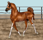 Total - His First Showing by TimberlakeLaneEC
