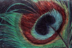 Eye Feather by keinneb