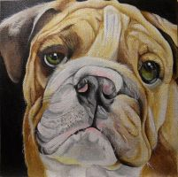 Bulldog by Launadoon