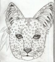 Indie Leopard ? by KHAqua