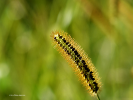 Grass grain by Mogrianne