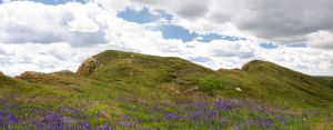 Premade Panorama meadows by DarkBeforeDawn23