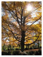 The Glory of Fall - 2010 by CrystalMarineGallery