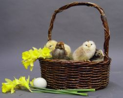 Easter stock 1 by InKi-Stock