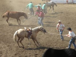 St. Paul Rodeo: Wild Horse Race by BarrenLand