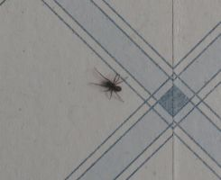Spider on my wall 1 by Kattvinge