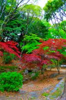 Zojo-ji Temple Park by Nature-And-Things