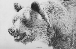 Grizzly Bear by Naviira