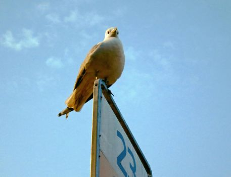 Seagull posing at bus stop by elainelouve